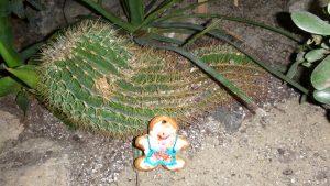Ui ist das stachelig...ein Kaktus halt